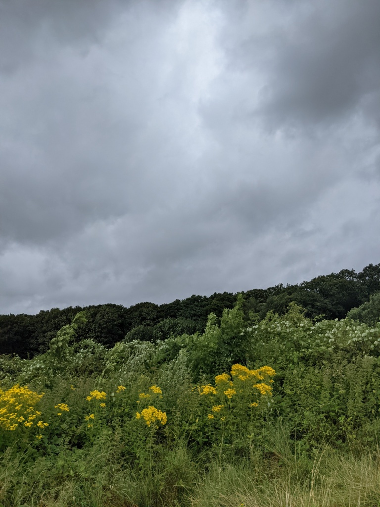 Picture of a meadow and woodland under stormy skies